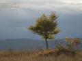 Herbstbild_1200
